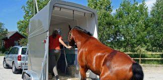 Перевозка животных автомобильным транспортом.