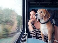 Правила перевозки животных в поездах РЖД